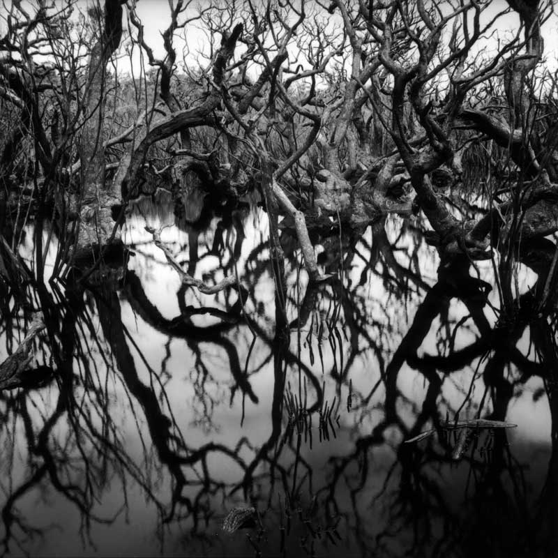 Burnt Melaleuca Swamp, Karara Forest, Australia, black and white wetland landscape - © John Austin