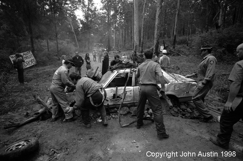 Forest Protest Pennys Dragon Wattle Forest 1998 - © John Austin