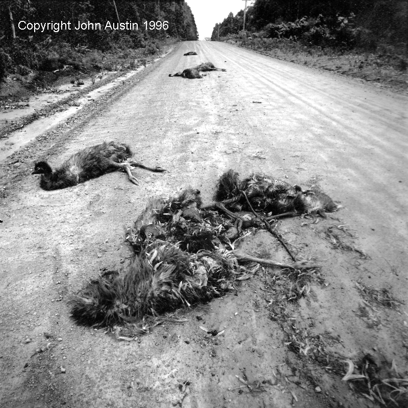 Seven Dead Emus picture story
