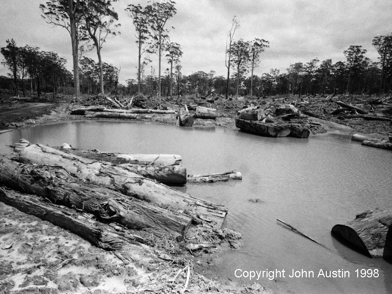 Flooded Log Landing, Gardner State Forest after clearfelling, 1998 - © John Austin